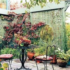 landscaping ideas, privacy screens, trellis by patio, fenc, backyard private areas