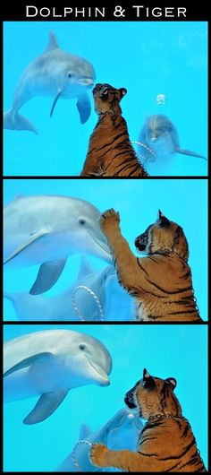 and it was adorable... | The 30 Most Inspiring Interspecies Friendships Of TheYear