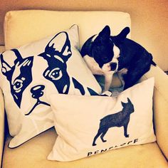 """Hiding here - they'll never find me"". Like those pillows"