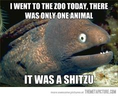 Bad Joke Eel Goes To The Zoo…