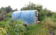 Dive for cover: Lia Leendertz with her new allotment toy. Poloy tunnel for over wintering gardening