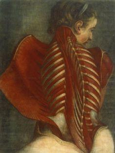 Jacques Fabien Gautier d'Agoty, Anatomy of a Woman's Spine, 1746