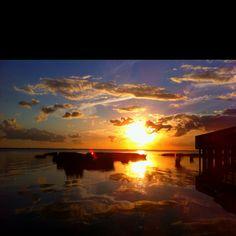 duck, bank sunset, beach