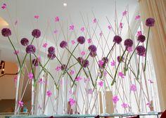 allium balls and vanda orchids balls, thing purpl, allium ball, grove 100611, orchid display, vanda orchid, flower