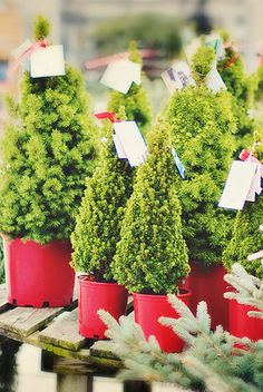Little Christmas Trees :)  /Provenance unknown.  Not uploaded by this pinner.  Image may be subject to copyright./