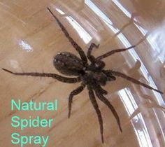 Natural Spider Spray. Find out how to make spider spray without harmful chemicals.