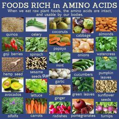 """How many do YOU """"like""""?❣❣❣  Foods rich in Amino acids ❥➥❥ #quinoa #celery #coconuts #cabbage #almonds #spinach #papaya #onions #watercress #mint #cucumbers #avocados #lettuce #ginger #alfalfa #carrots #radishes #pomegranates #turnips Sesame seeds Pumpkin seeds  ♥Like✔""""Share""""✔Tag♥Comment✔Repost✔God Bless♥  ℒℴѵℯ / Thanks / Visit ❥ Rawforbeauty  #GodsGardenOfEden #Health #FoodsYummylicious ♡ ♥ ♡ pinned with Pinvolve - pinvolve.co"""