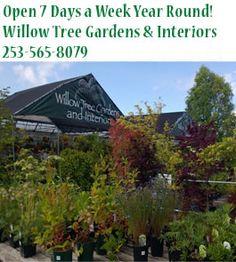 Indoor Garden - University Place, WA - Willow Tree Gardens  Interiors - Home  Garden Accents - Open 7 Days a Week Year Round! Willow Tree ...