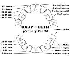 Pediatric Dentistry - Chesapeake, VA dental health month activity