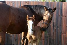 A foal out of Kind, by Galileo, is a full brother to Frankel.