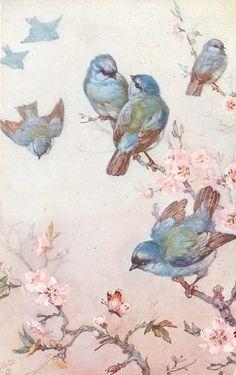 bluebird, vintage prints, art, blossom trees, vintage birds, bird prints, wallpapers, blue bird, vintage cards