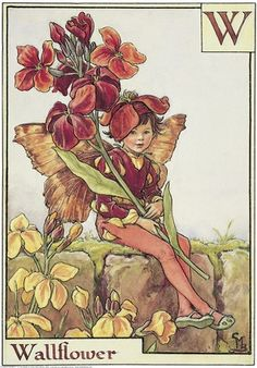 cice mari, mari barker, wallflow fairi, flowerfairi, wall flower, alphabet, flowers, flower fairies, cicely mary barker