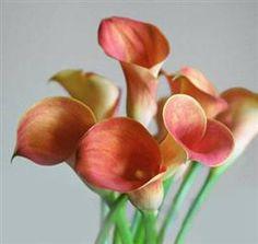 passion fruit callas