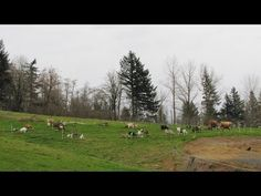 A Small Scale Integrated Livestock Farm (all this on only 10 acres!)