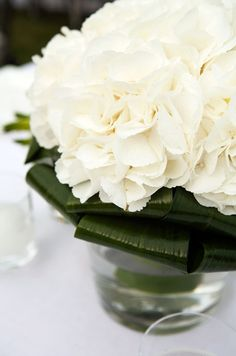 Like this idea: Pair white hydrangeas with dark green leaves white flowers, flower centerpieces, white hydrangea, wedding bouquets, simple centerpieces, wedding flowers, white weddings, reception centerpieces, green weddings