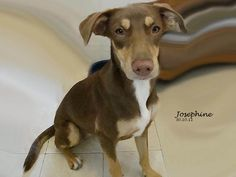 Josephine adopted in Oct 31, 2011.