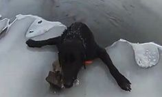 Dog rescued from freezing icy river.