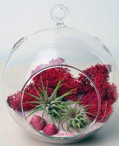 Air Plant Terrarium // Hanging glass orb // Red Reindeer Moss // Pink Sand //