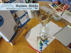 Studying Native Birds: Part 1