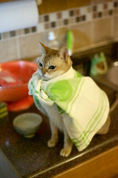 Super Kitty in a Green Cape