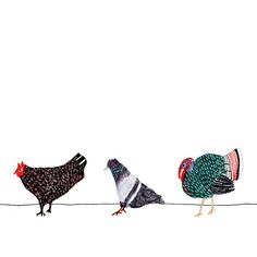 Hen, pigeon, turkey | Illustrator: Grace Lee | #illustration #poultry #birds