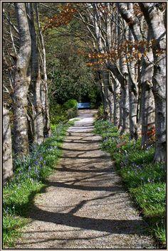 Up the Garden Path - Olinda, Victoria, Australia