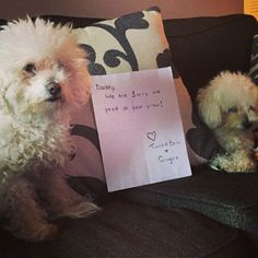 Dog Shame | Daddy, sorry we peed on your pillow..