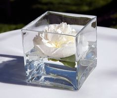 A single peony floats in a small square vase.