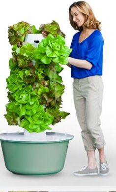 Grow your own salad in a tower - no dirt, no pesticides !! so cool !!