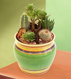 Beautiful Cactus Dish Garden In Ceramics