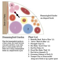 Hummingbird Garden for a Corner and photos of the flowers that go in them.