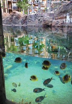 Aulani, a Disney Resort
