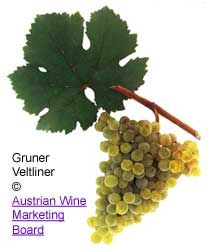 Austria's most prominent white grape:  Grüner Veltliner