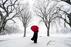 red, red, red stunning photography, redumbrella, umbrellas, parks, winter wonderland, snow, red umbrella, photographi, navid barati