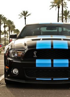 Magnificent Blue Baby, The Cobra 'Stang