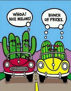 Nice Melons ... Bunch of Pricks