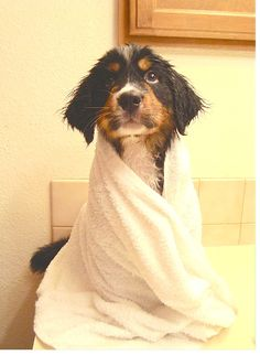 Make your own eco-friendly and safe pet shampoo. #DIY #pets