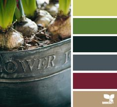 potted hues