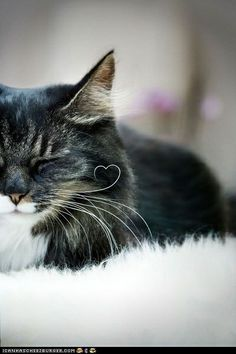 Cute Kitty stinedna