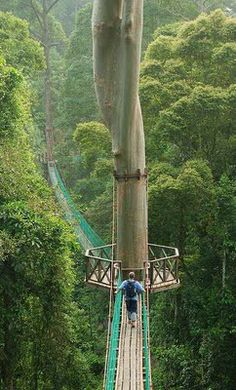 See the picz: Borneo Rainforest Canopy Walkway