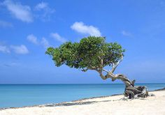 The beautiful beaches of Aruba. #beaches