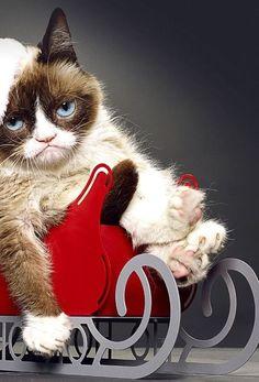 4) Grumpy Cat