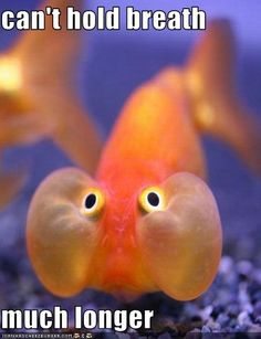 Funny fish picture