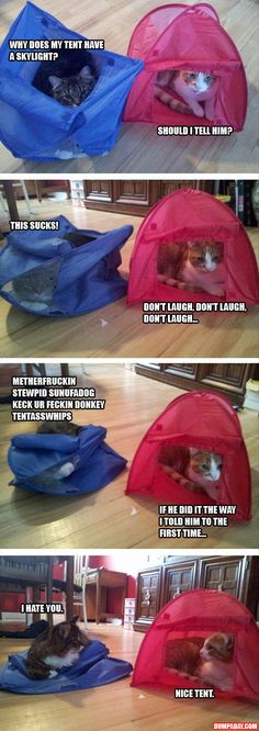 the red tent, tents, silly cats, funny pictures, funny cats