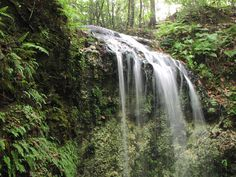 Visit Florida's highest waterfall at Falling Waters State Park in Chipley, FL.
