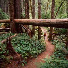 The Lewis River Trail in Southern Washington