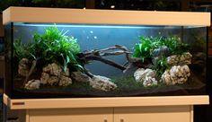 Aquascaping Aquascaping Tipps von Oliver Knott - aquariumeinrichten ...