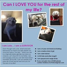 """"""" Our lives begin to end the day we become silent about things that matter """"  Well thank god that Lola mattered to one great lady that took it on her to give this sweet girl a chance and fostered her. FOSTERING A DOG SAVES LIVES"""