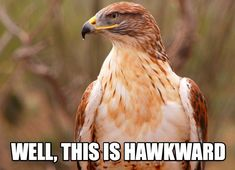 15 Animal Puns You Can't Live Without