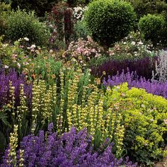Mottisfont Abbey Gardens, Hampshire, UK Detail of the borders with alchemillas, nepeta, sysirinchiums and stachys by ukgardenphotos, via Flickr